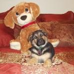 Zasha&StuffedDog.jpg